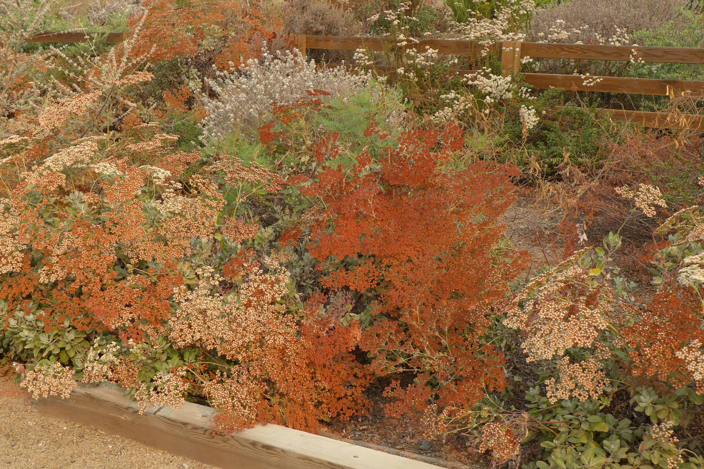 October in the Natural Garden – Tree of Life Nursery