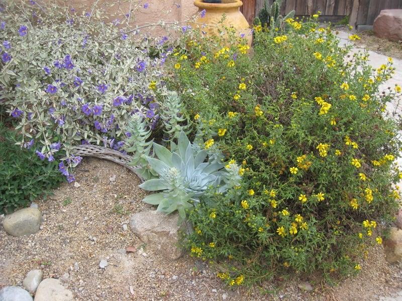 desert_garden