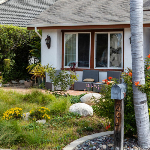 A California native plant meadow replaced a hungry lawn in this front yard.