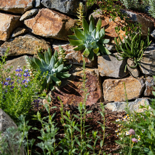 California native succulents accent this custom built rock wall.