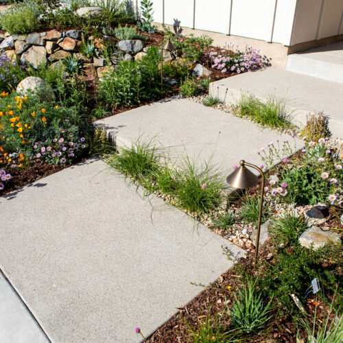 Native sedges soften edges on these wide pavers.